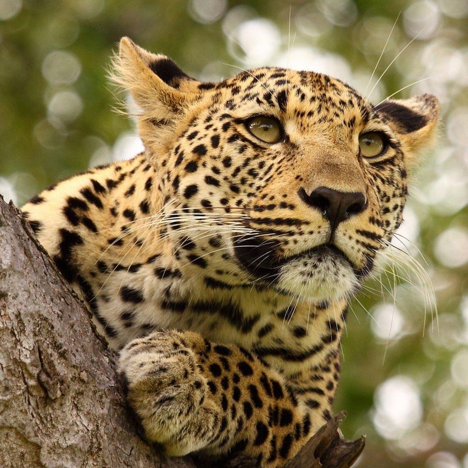 viaggi safari botswana