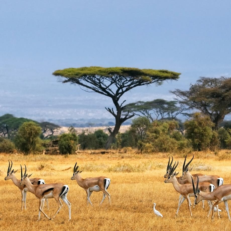 africa-kenya-safari