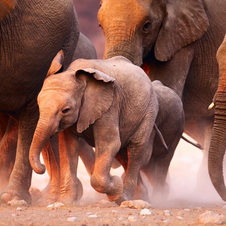 viaggi safari namibia