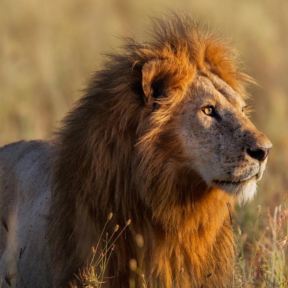viaggi safari africa tanzania