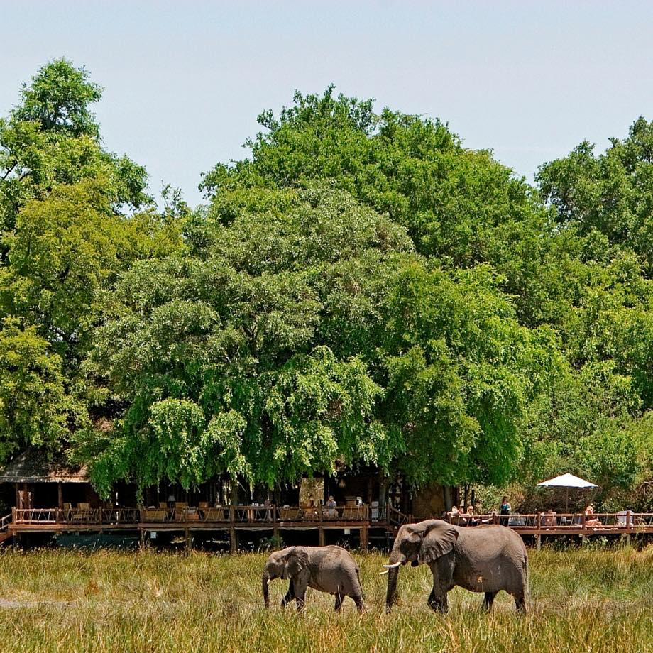botswana africa viaggi lusso