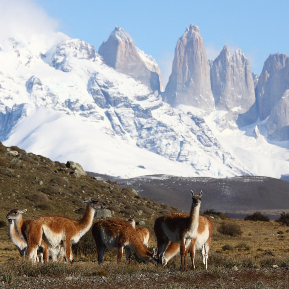cile-awasi-patagonia-hotel-7