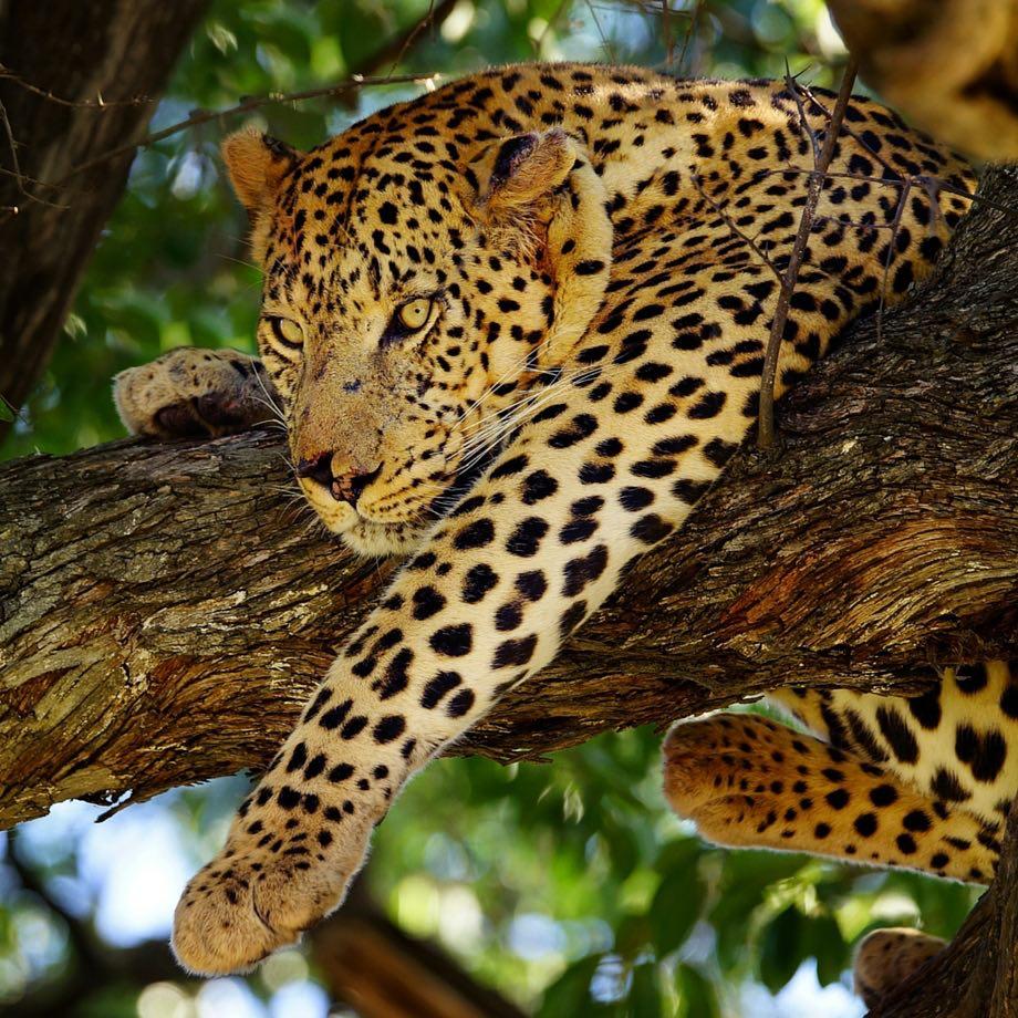 informazioni utili botswana moremi game reserve