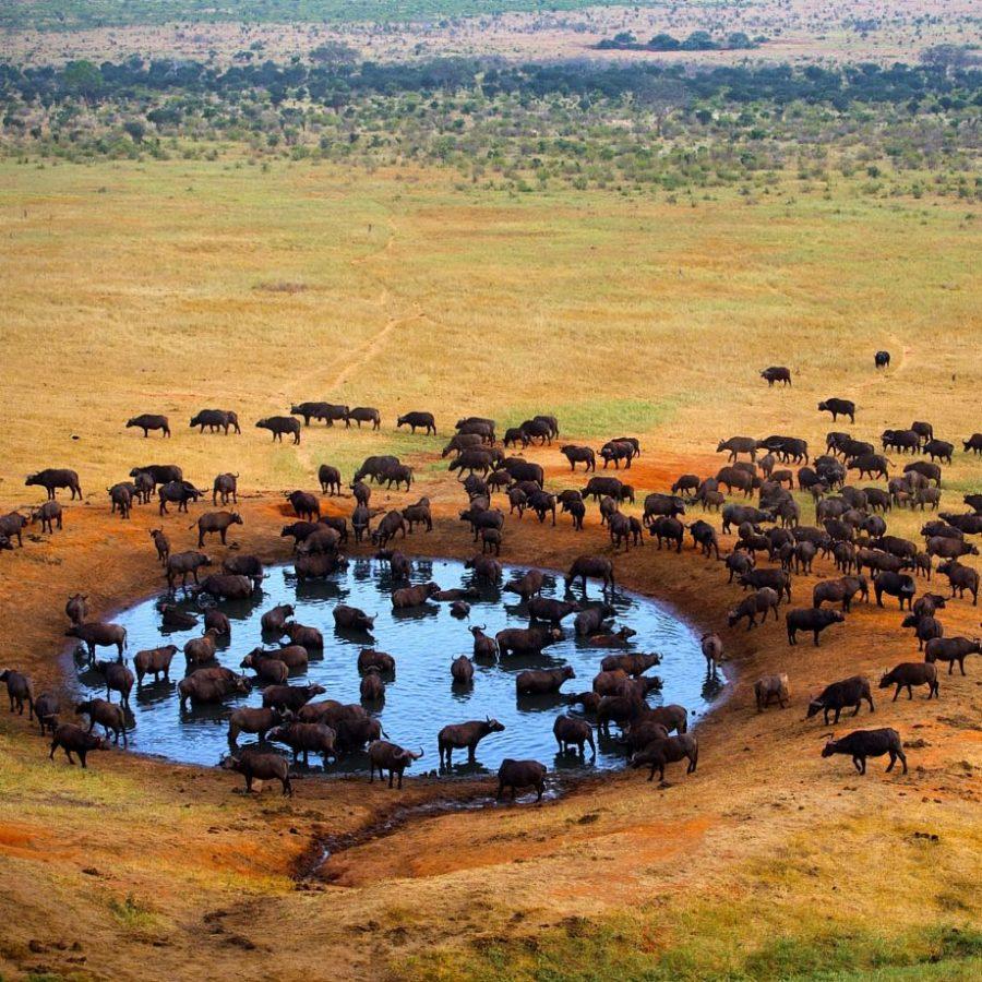 Kenya incontri e romanticismo