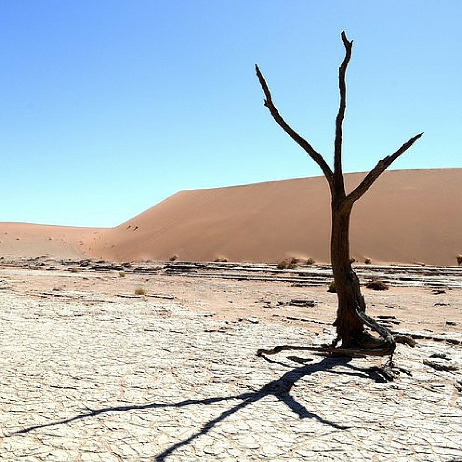 namibia africa safari hoodia desert lodge luxury