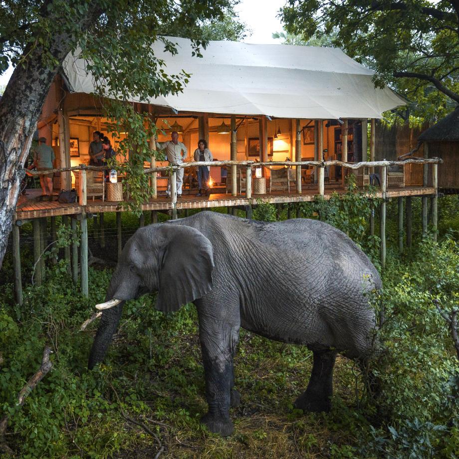 safari-africa-botswana-tubu-tree-camp-wilderness-safari-7