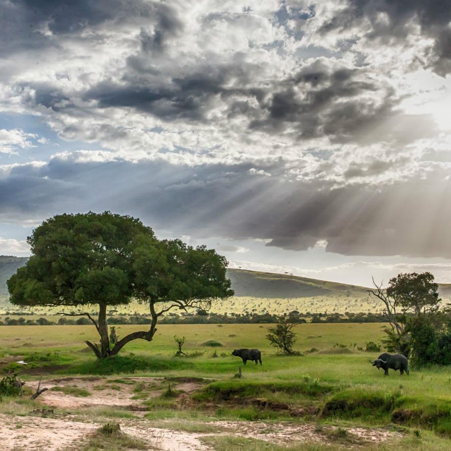 safari-africa-tanzania-andbeyond-serengeti-under-canvas-11