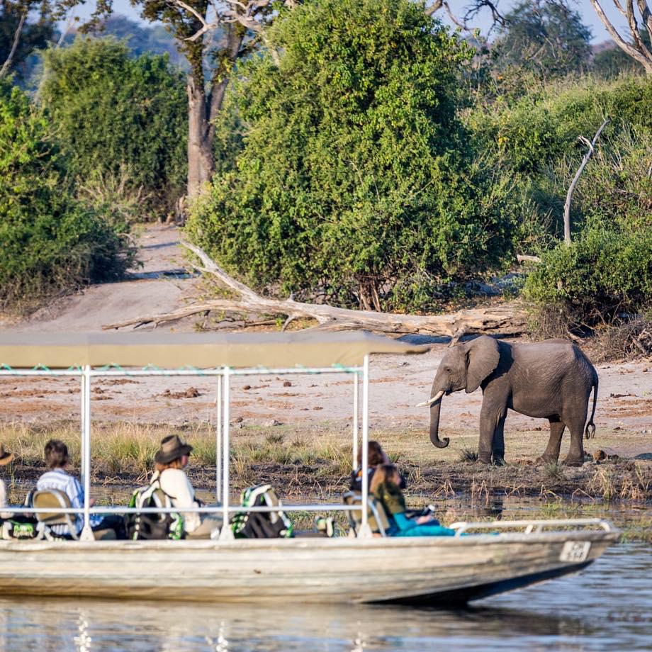 safari africa botswana chobe national park