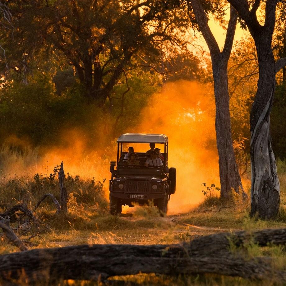 safari botswana moremi game reserve