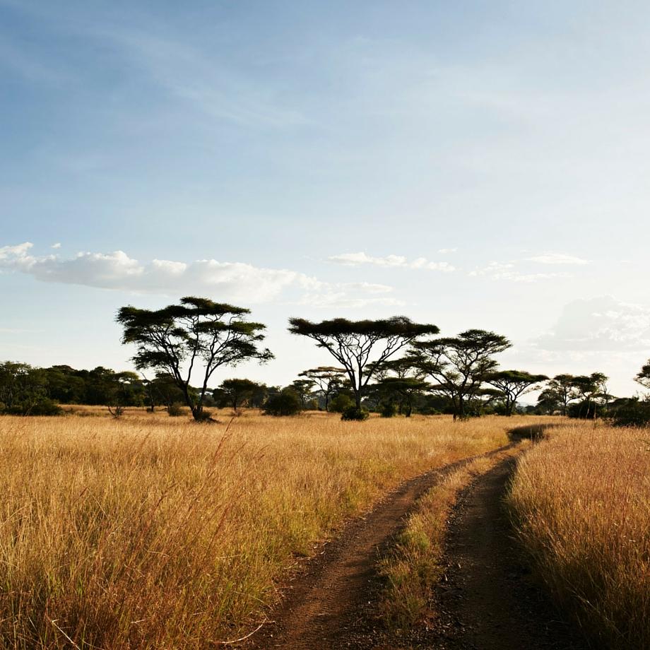 safari-tanzania-singita-faru-faru-12