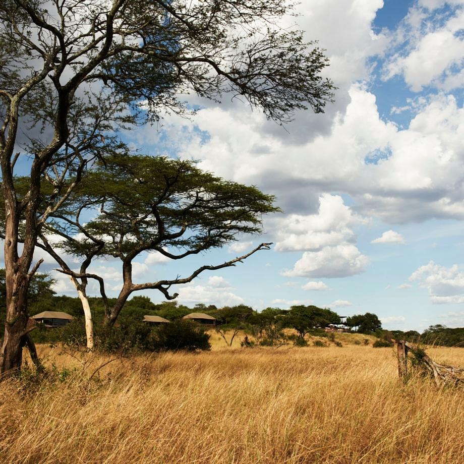 safari tanzania singita faru faru
