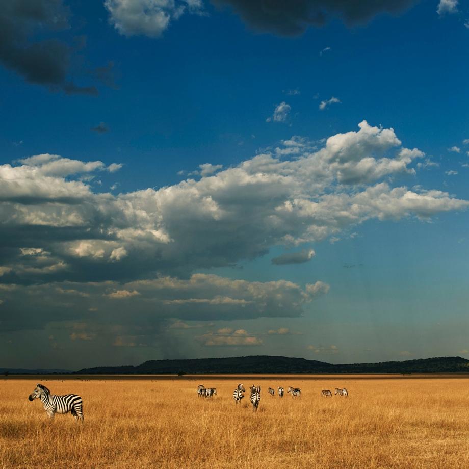 safari tanzania singita sabora