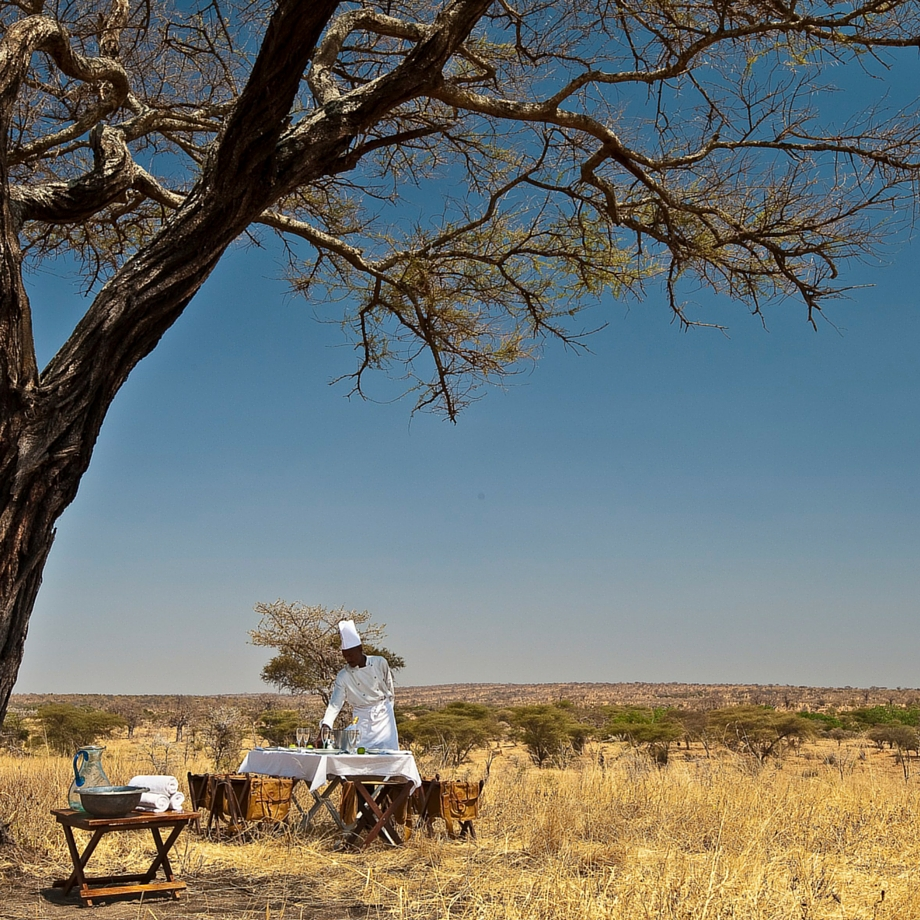 safari-tanzania-tarangire-treetops-2