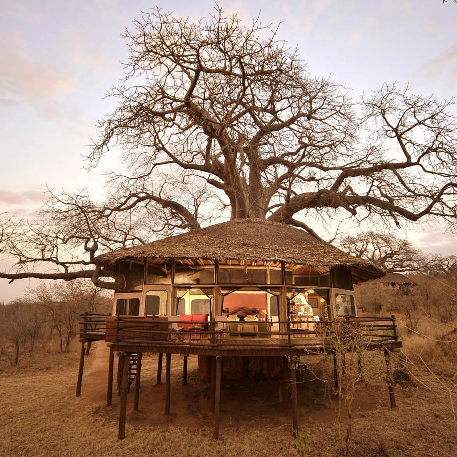 safari-tanzania-tarangire-treetops-6