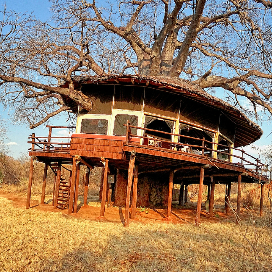 safari-tanzania-tarangire-treetops-7