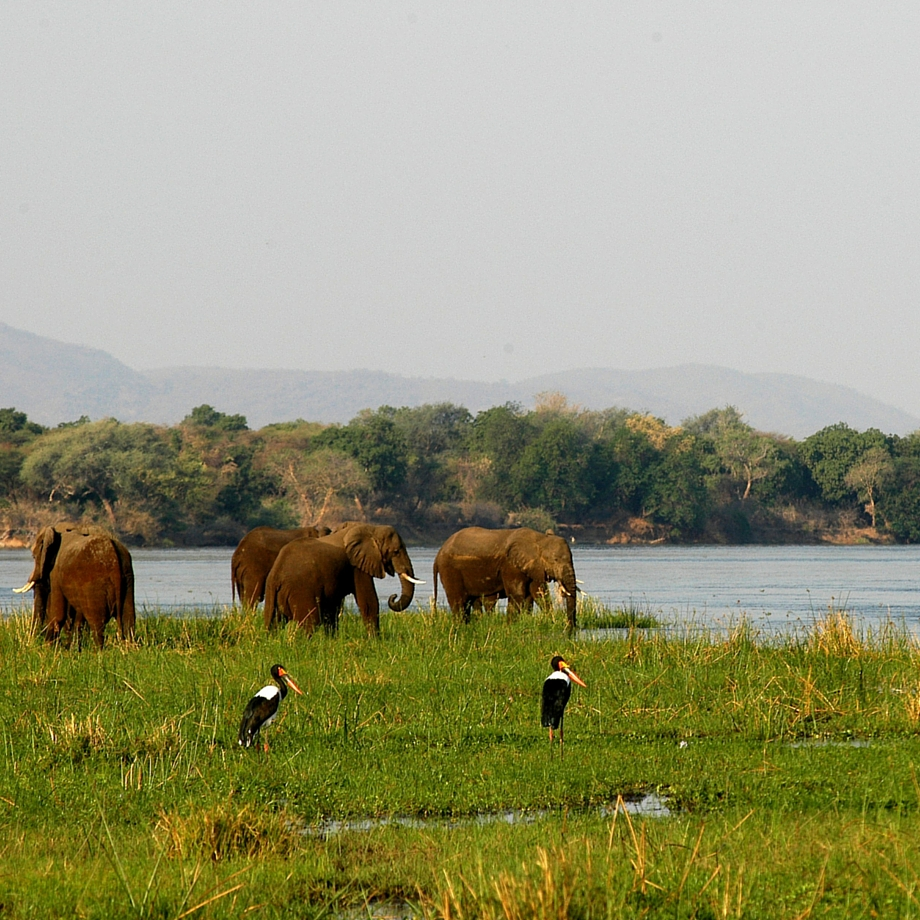 safari-zambia-chiawa camp1