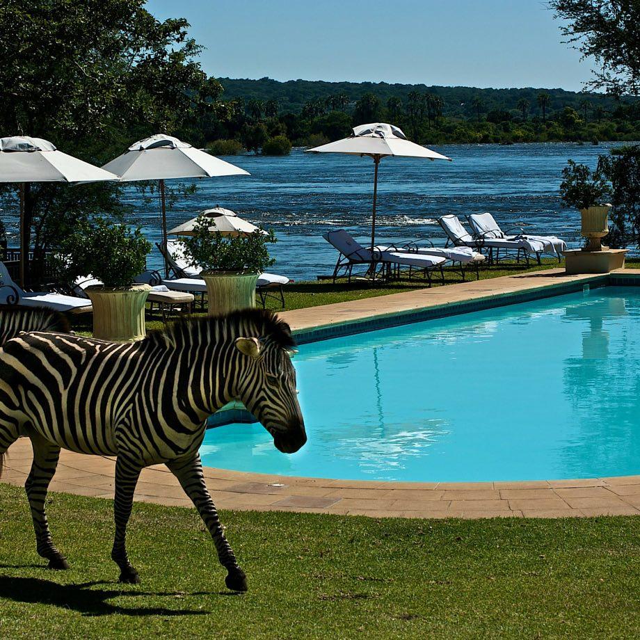 safari-zambia-royal-livingstone8