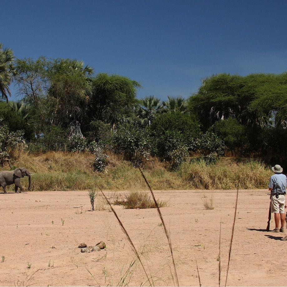 tanzania-africa-safari-jongomero-camp-luxury-2