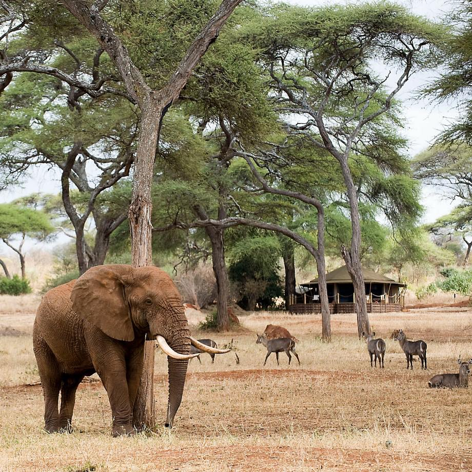 tanzania-africa-safari-sanctuary-swala-camp-luxury-4