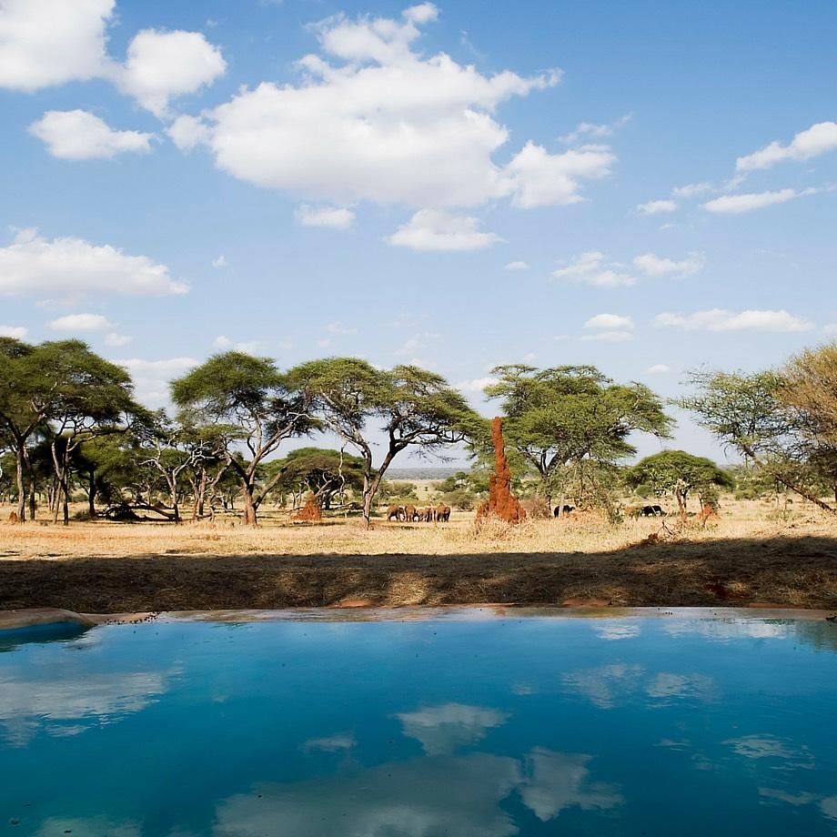 tanzania-africa-safari-sanctuary-swala-camp-luxury-7