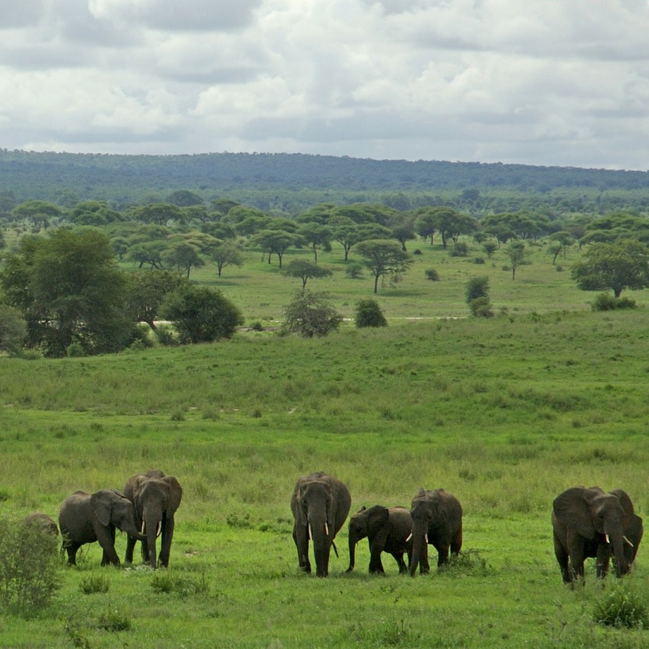 tanzania-africa-safari-sanctuary-swala-camp-luxury