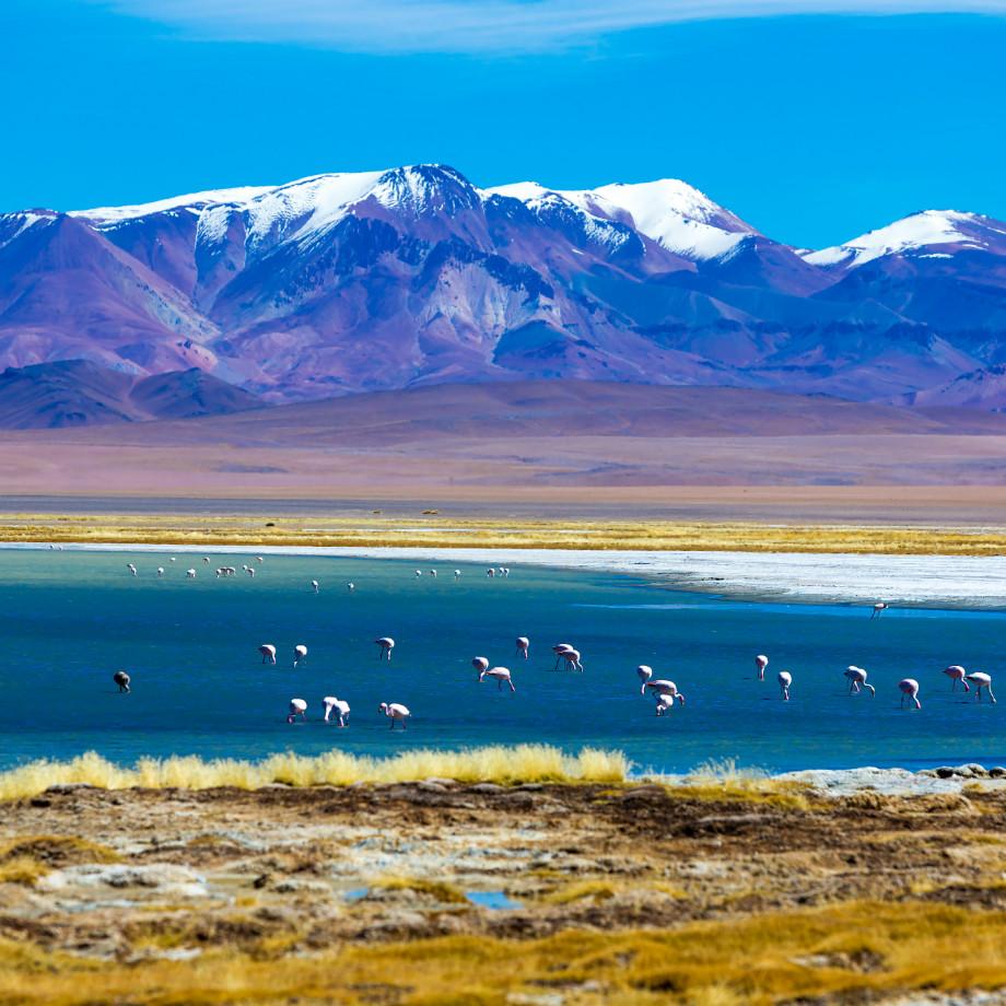 viaggi sudamerica tour di gruppo cile atacama