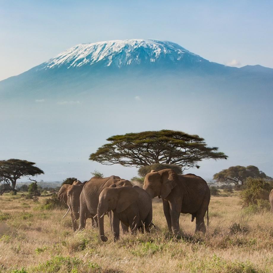tour individuali safari africa tanzania kilimanjaro