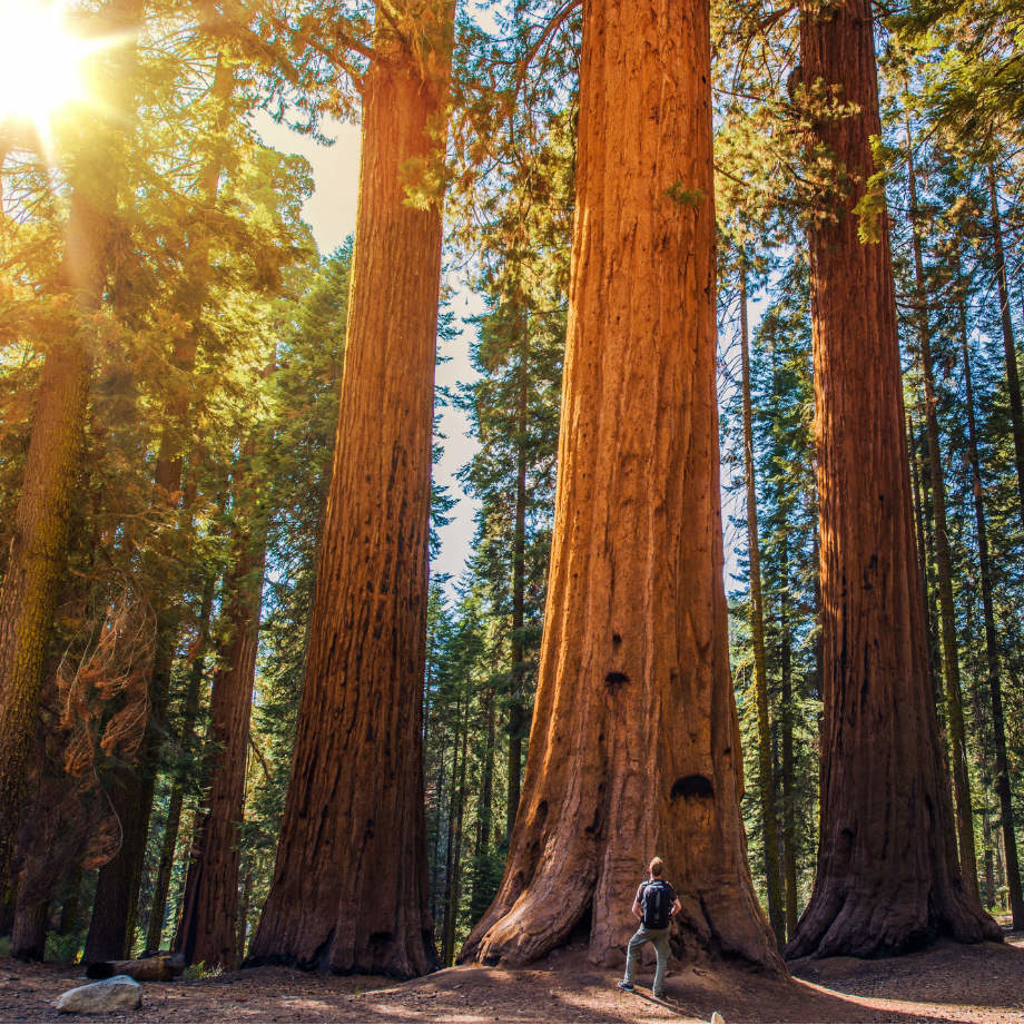 tour individuali stati uniti sequoia national park