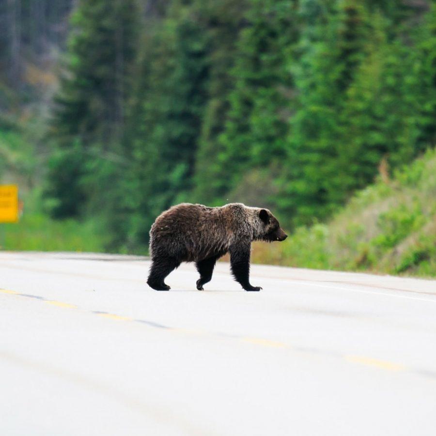tour operator canada jasper national park