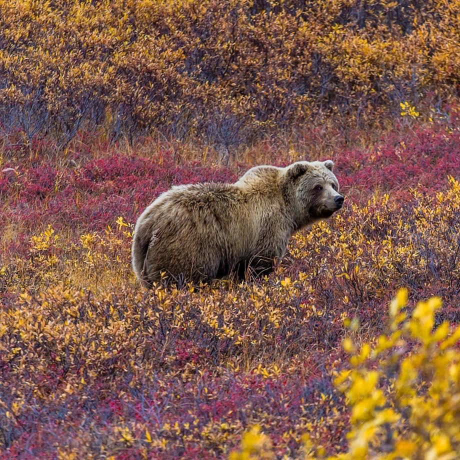 tour organizzati stati uniti alaska denali national park