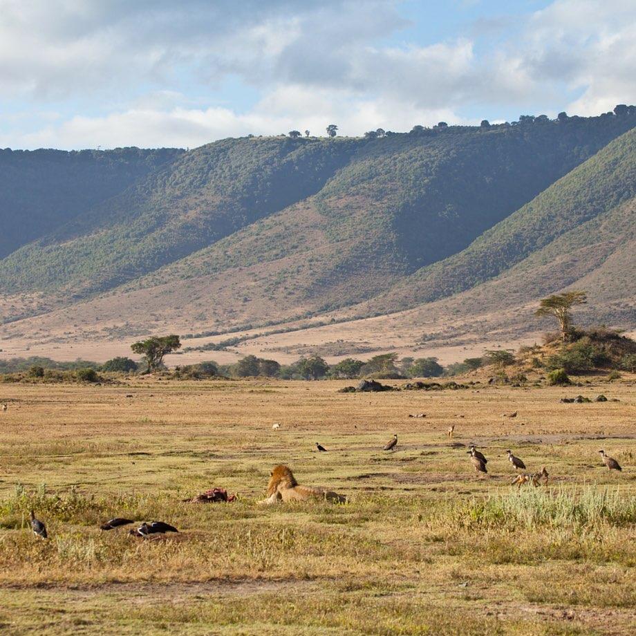 tour organizzati tanzania cratere del ngorongoro