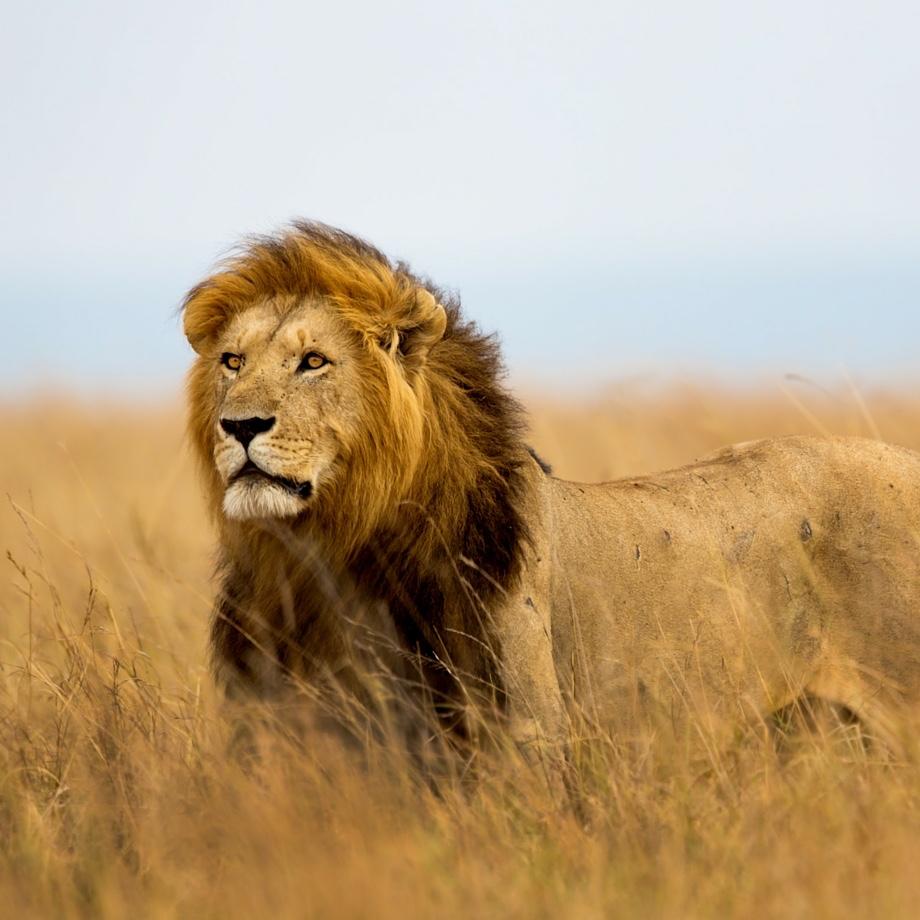 tour organizzati safari tanzania serengeti national park