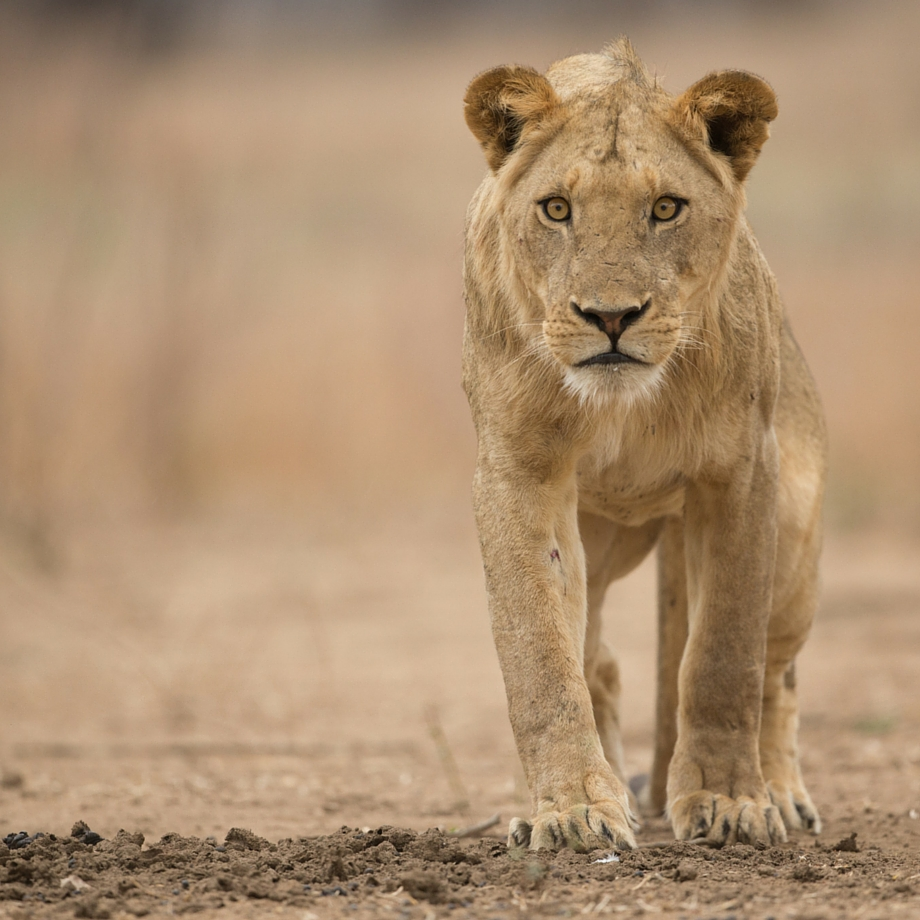tour su misura safari zimbabwe mana pools national park